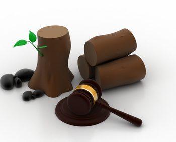 quelle hauteur pour les arbres archives auxis avocats. Black Bedroom Furniture Sets. Home Design Ideas